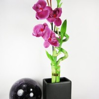 9GreenBox - Live Spiral 3 Style Lucky Bamboo Plant Arrangement w/ Black Ceramic Vase & Silk Orchid Flower