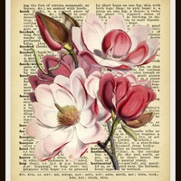"Vintage Art Print Botanical Magnolia on Dictionary Page Ephemera , Print Wall Decor, 8 x 10"" Unframed"