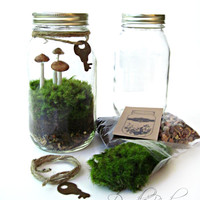 SALE Terrarium Kit / Mason Jar Kit & Plants / by DoodleBirdie