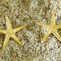 Large Starfish Earrings