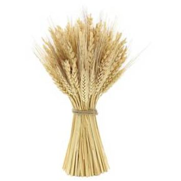 "Wheat Bundle and Jute (12"") Smith & Hawken™"
