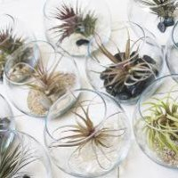 Small Fish Bowl Terrarium // Air Plant with Adornments by tohold
