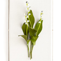 Original Painted Lily-of-the-Valley Study - Tommy Mitchell