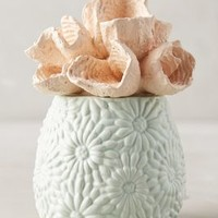Coral-Topped Candle by Anthropologie