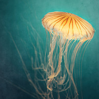 Nature Photography, Jellyfish Photograph in Teal and Orange, Turquoise, Sea Creature, Aqua, Yellow, Nautical, Summer, Ocean - Medusa