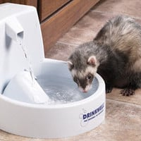 Ferret Water Dishes: Drinkwell Fountain at Drs. Foster & Smith