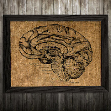 Brain print Anatomy art Medical poster Biology print BLP395