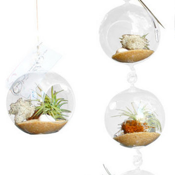 Tri Level Airplant Terrarium -Beach Theme