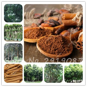 5 Pcs Japanese Cinnamon Seeds Dwarf Trees Seeds Indoor Bonsai Pot Container Home Garden Supplies Plants Make For Food