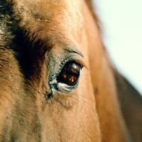 Horse Photograph Animal Art Equestrian Photography by Colourscape