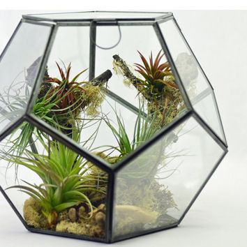 Best Air Plant Terrarium Kit Products On Wanelo
