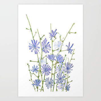 blue chicory watercolor Art Print by Color and Color