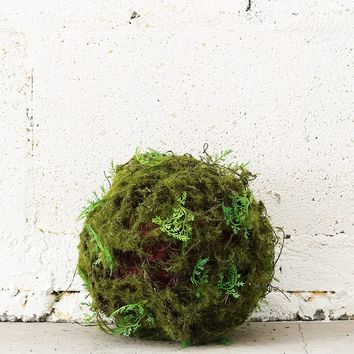 "Moss and Fern Greenery Pomander Ball - 6"" Wide"