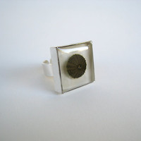 Real urchin shell ring. Unique white summer sea aquatic nautical ocean greek jewelry mediterranean nature. Statement silver adjustable ring