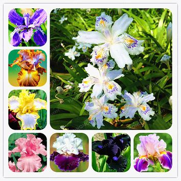 24 Colours Iris Flower Seeds Bonsai Flower Seeds  Rare Iris Tectorum Perennial Flower Seeds Plant For Home Garden 20 PCS