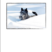 Scottie Dog Christmas (or Anytime) Greeting Card - Scottish Terrier Card - Dog Holiday Greeting Card - Scotty Dog Greeting Card