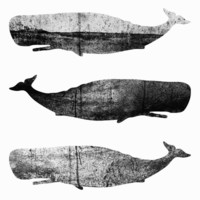 Whales - III Stretched Canvas by Elisabeth Fredriksson
