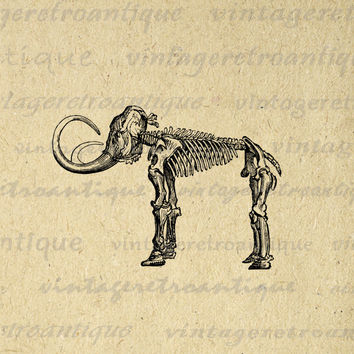 Mammoth Skeleton Digital Graphic Download Elephant Printable Image Vintage Clip Art for Transfers etc HQ 300dpi No.443