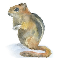 Watercolor Painting Chipmunk - 5 x 7 - Giclee Print - Woodland Animal Nursery Art