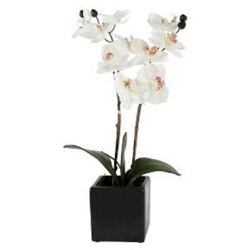 "Artificial White Orchid 21"" - Lloyd & Hannah"