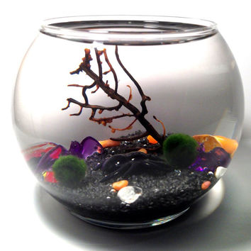 Marimo Moss Ball Halloween Terrarium / Green Gift / Table Art / Home Decor