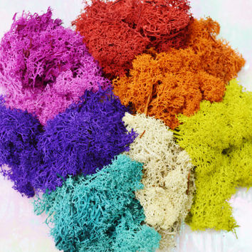 Reindeer Lichen Moss ~ Preserved and Colored ~ Rainbow of Colors ~ 7 Colors included in this listing ~ 3 x 4 Inch Bag of Each Color ~ Deal