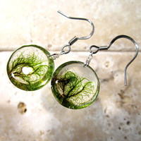 Moss (Dicranidae sp.) Earrings, woodland, forest, bryophytes, plant jewellery, leaf jewelry