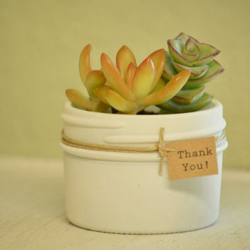Succulent Favors in 4 oz Jam Jars with Twine White or Ivory with Thank you Tags