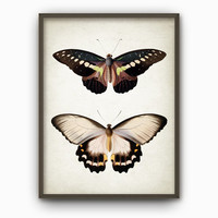 Antique Butterfly Illustration Wall Art Poster - Vintage Butterfly Book Plate Wall Art - Butterfly Picture Home Decor (AB278)