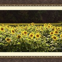 Sunflower 20 #sunflowers by Andrea Anderegg Photography