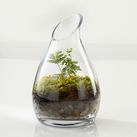 Live Terrarium To Go™, Carafe,  at Brookstone—Buy Now!