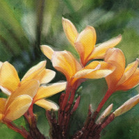 Beautiful Yellow Plumeria 5x7 Greeting Card (Blank inside)
