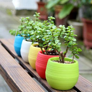 Mini Colorful Round Plastic Flower Pots