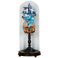 19th Century Glass Dome with Butterflies & Vanity