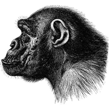 Profile of a Chimp (Black) Plastisol Heat Transfer