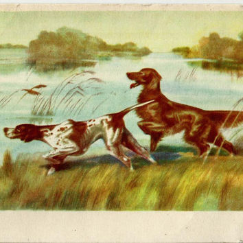 Dogs, Vintage Postcard Russian Soviet, Illustration Kurdov unused 1958