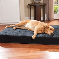 Doctors Foster & Smith Super Deluxe Orthopedic Pet Bed - 24'' x 42''