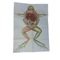 Pre-owned Vintage Anatomy Science Poster - Frog