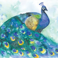 Watercolor Painting Peacock Blue Bird Giclee Print 8 x 10