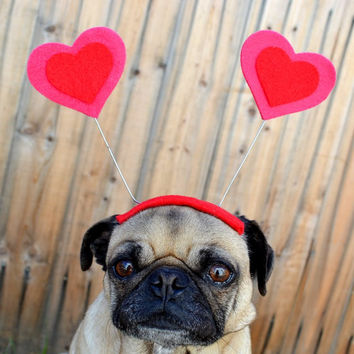Valentines Day - LOVE bug HEART Hat for all size pet