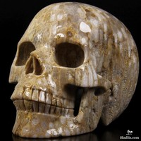 """Huge 5.0"""" Coral Fossil Carved Crystal Skull, Realistic"""