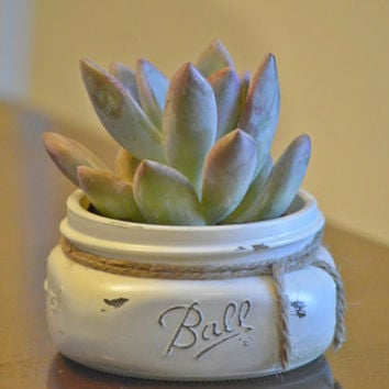 Succulent Garden in Ivory Distressed Painted Mason Jar Pot -Send as a Gift, Wedding or Baby Shower Favors Centerpieces