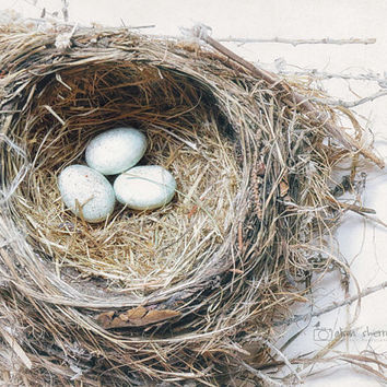 Nature Photography, Farmhouse Chic Bird Nest Decor, Neutral Wall Art Print, Rustic Home Decor, Pale Blue & Brown Nursery Art | 'Three Eggs'