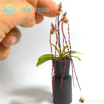 100 Pcs Orchid plants Mini Bonsai plants Indoor Home Miniature Flower Pots Planters For Garden Plants 2018 Rare Flowers Gift bon