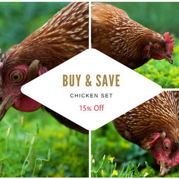 Chicken Photo Set - Set of 3 Farm Animal Wall Art, Buy and Save, Nature, Garden Art, Bird, Green, Yellow, Brown Home Decor