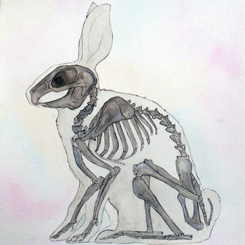 Rabbit, bunny skeleton, animal, watercolor painting, anatomy, anatomy art, art, painting, drawing, picture
