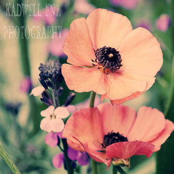 Rising Above 5x5 Orange Poppies Fine Art Print Flower Photography Floral Home Decor Wall Art Nature Photography