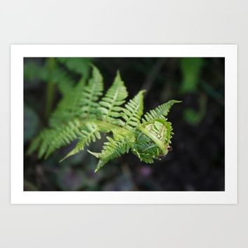Fiddle fern Art Print by Pepperberry And Sage
