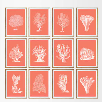Sea Coral Art Print SET OF 12. A4 UNFRAMED Coral Decor, sea coral fan, sea fan art, antique coral, coral art, botanical art, coral wall art