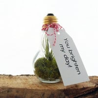 Valentine's Day Gift - Elegant Air Plant In Light Bulb Terrarium - Surprise Someone You Love for Valentines Day - Customized Messages